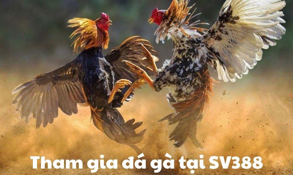 Tham gia đá gà tại SV388